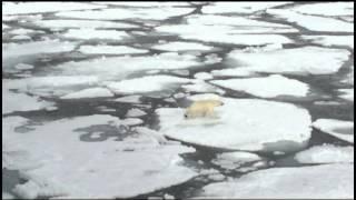 Белый медведь атакует тюленя(, 2015-07-08T12:32:58.000Z)