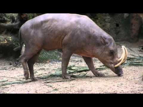 Fauna Indonesia-