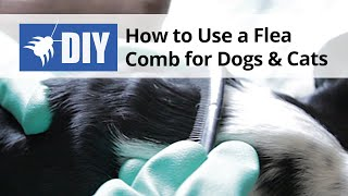 How to use a Flea Comb for Dogs and Cats