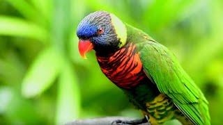 Florida Travel: Ecotourism at the Brevard Zoo