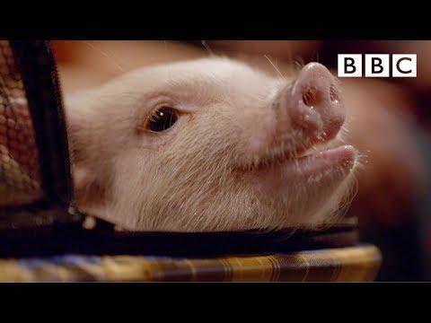 This cute animals day will delight you 🥰 - BBC