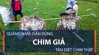 Quảng Nam: Dân dùng chim giả tận diệt chim thật | VTC1
