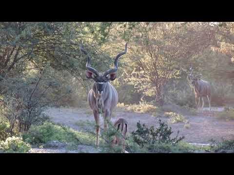Botswana Hunting Safari Lodge