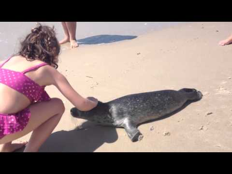 Baby Seal on Beach - Atlantic Beach Club