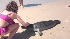 Baby Seal on Beach - Atlantic Beach Club