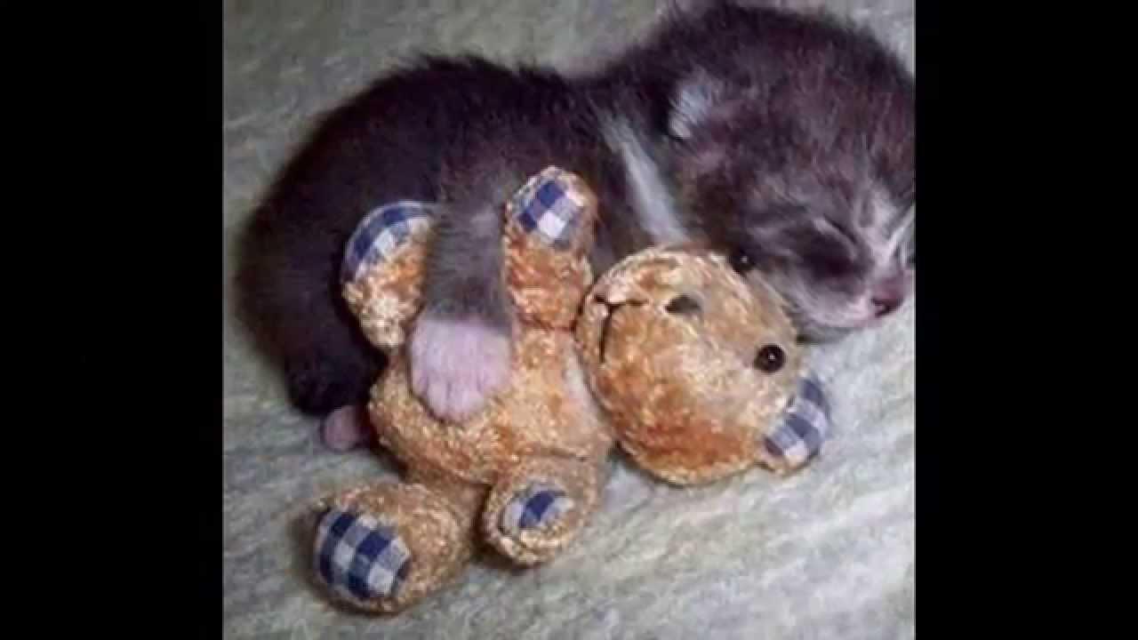 Фото приколы с животными очень смешные, улыбнись! - YouTube