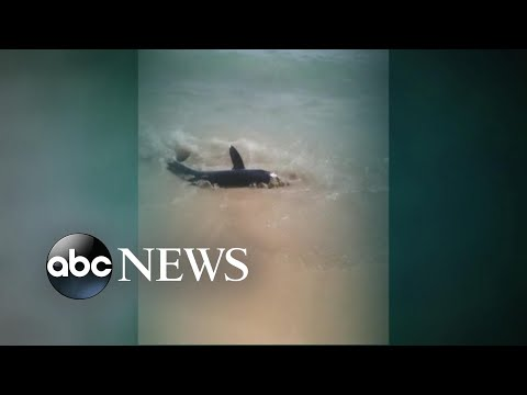 Shark Bites Paddleboard Off Cape Cod Beach