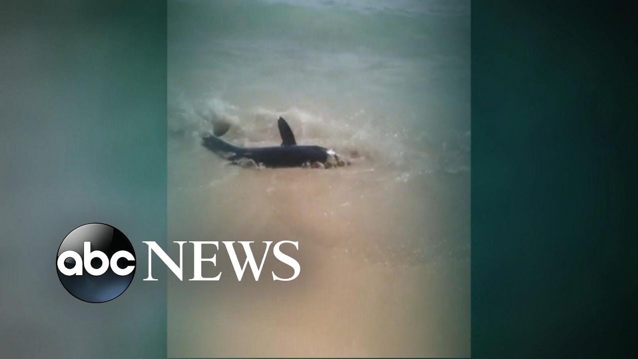 Shark bites paddleboard off Cape Cod beach