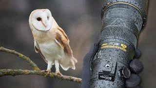 Wildlife Photography Vlog | Barn Owl | Nikon D850 & 500PF