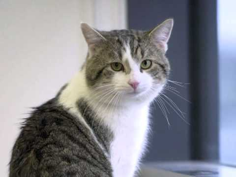 Happy as Larry: new Downing St cat to fight rats
