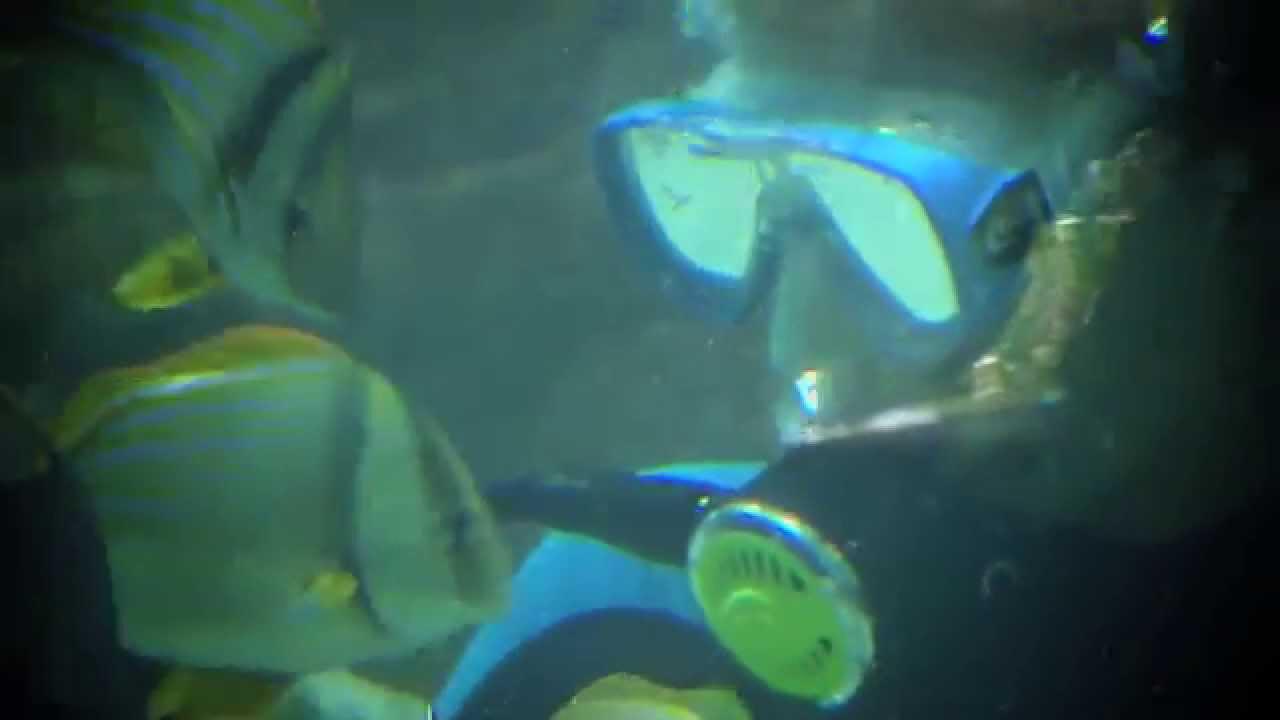 Aquarium Encounters Fl Keys Moment Sportsman 39 S