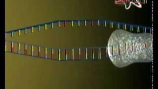 ADN Y ARN2.flv