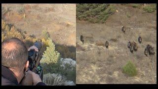 Wild Boar Hunting.Süper Bir Domuz Avı.
