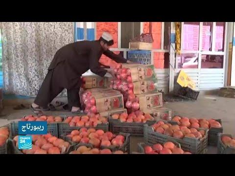 رمان قندهار -بديل الأفيون- ضحية البرد القارس وتوتر العلاقات بين أفغانستان وباكستان  - نشر قبل 23 دقيقة