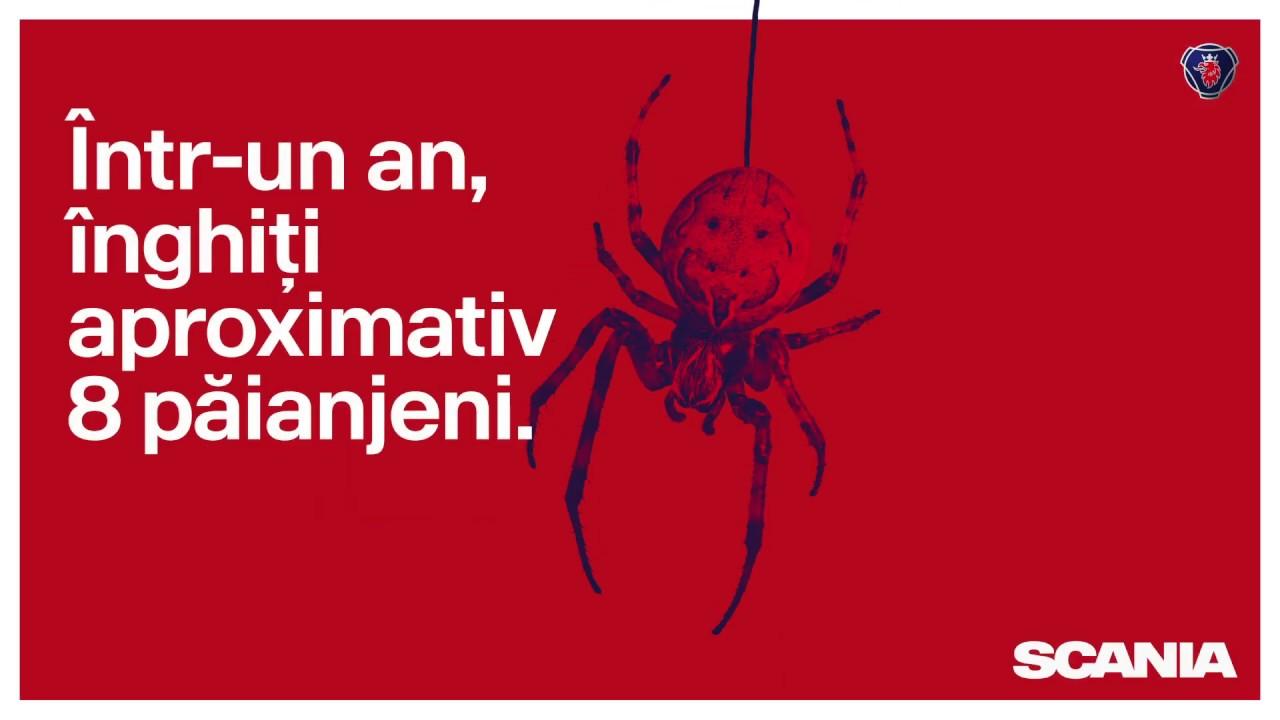 păianjen de culoare asemănător