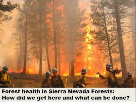 California Forest & Climate Policy  What it Means for the Sierra