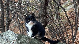 겨울맞이 검은 코트를 차려 입은 멋진 산고양이