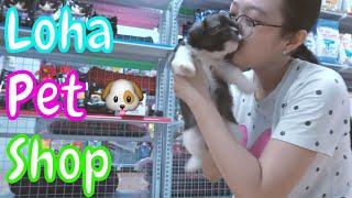 Bầy chó Bắc Kİnh ląi Nhật đáng yêu tìm chủ nuôi - L๐ha Pęt Shop