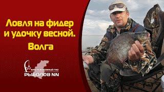 Ловля на фидер и удочку весной  Волга