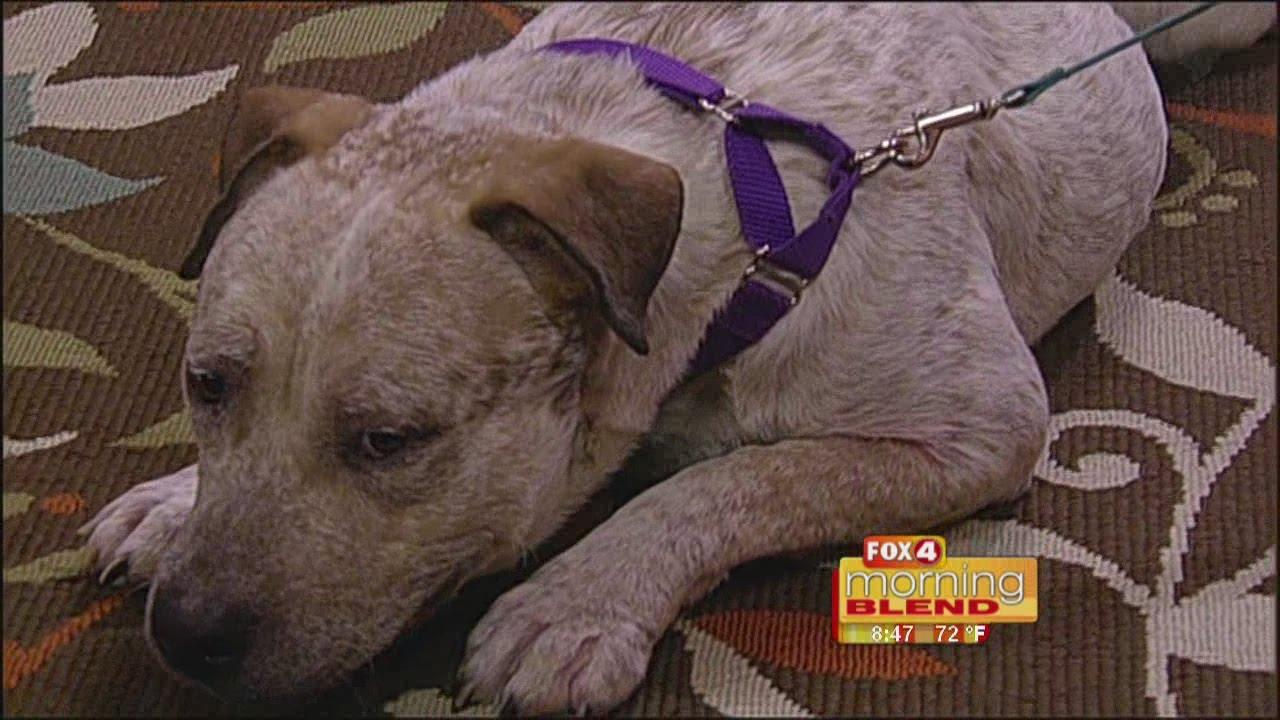 News - Gulf Coast Humane Society