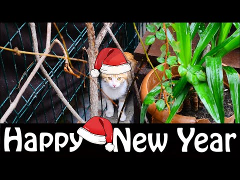 Happy New Year Cute Cats Stray Cats Eating Food 2020