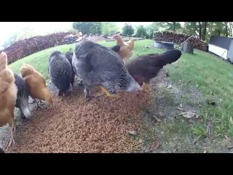 Feeding frenzy for the grains