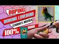 Cara Merawat Burung Lovebird Ngekek Ngetik Panjang  Work  Mp3 - Mp4 Download