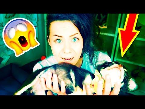 ЩЕНОК ЧУТЬ НЕ УМЕР! ВАЖНО! Спасла собаку от смерти, моя ужасная история о щенке Magic Family