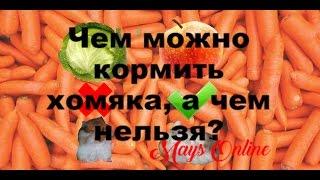 Чем можно и чем нельзя кормить хомяка? Маус заговорил! Mays Online