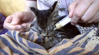 Спасаем котёнка