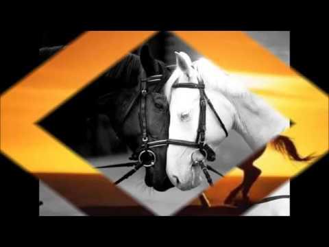 Cavalos Frases Youtube