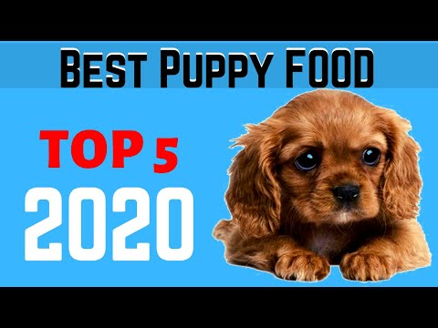 best-dog-food-for-puppies-in-2020-|-top-5-best-puppy-food-in-amazon