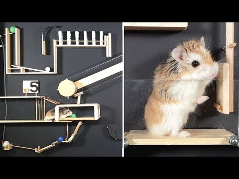 MAJOR HAMSTER vs DOMINOES & MARBLES - Amazing CHAIN REACTIONS