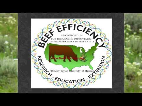 Improvement Of Feed Efficiency In Beef Cattle-Drs. Kris Johnson and Holly Neibergs