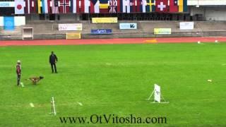 Ebor Ot Vitosha FCI  IPO 2014 Obedience thumbnail