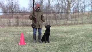 Training Your Labrador Retriever Puppy Part Seven