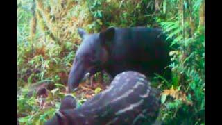 Avistamiento de dos especies amenazadas trae esperanza a campesinos y autoridades de Huila
