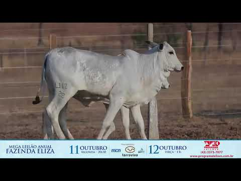 LOTE 140