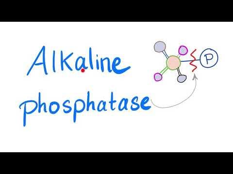 Alkaline Phosphatase (ALP) | Lab Test 🧪