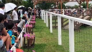 2018年6月30日に行った神戸どうぶつ王国でのドッグパフォーマンスショー...