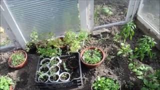 szklarnia jakie roślinki na ogrodzie poradnik co posadzić,posiać uprawiać