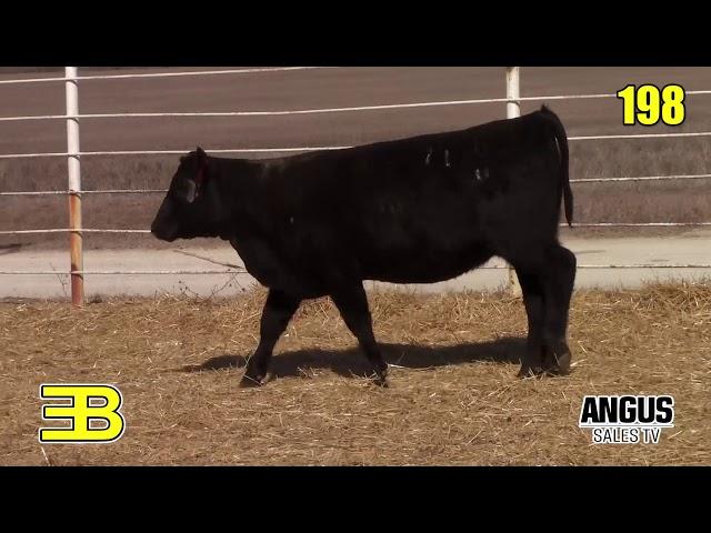 Benoit Angus Lot 198
