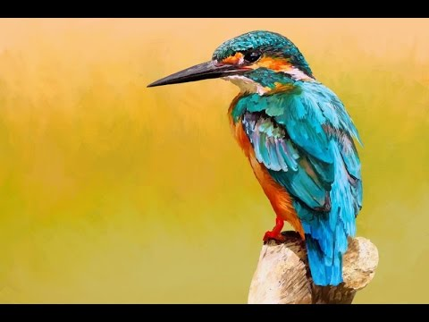 Kingfisher bird - digital painting (Time-Lapse video) - ArtRage 5