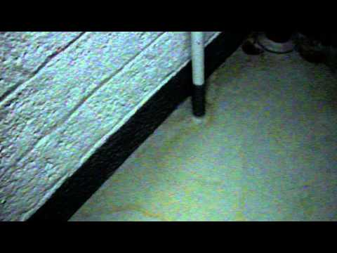 New York City Housing Authority Mess (Marble Hill Houses) part 2.AVI