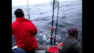 Video Pesca Desportiva Cascais download MP3, 3GP, MP4, WEBM, AVI, FLV Desember 2017