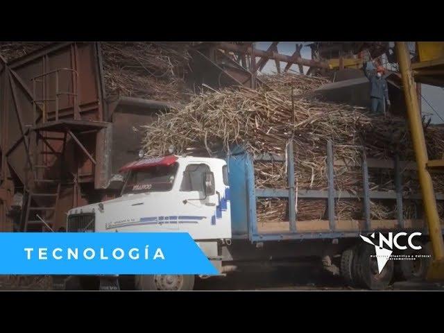 La apuesta por producción Biodiesel a base de caña
