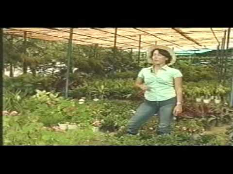 Siembra y recoge flores de sombra y flores de sol youtube - Plantas de sol y sombra ...