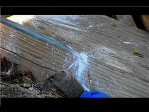 pest control how to get rid of fleas in the yard naturally youtube