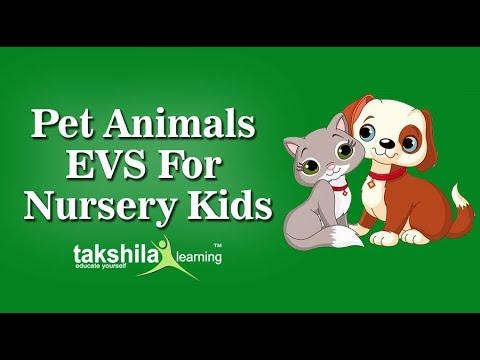 Nursery evs online classes school cbse syllabus worksheets ncert solutions also rh youtube