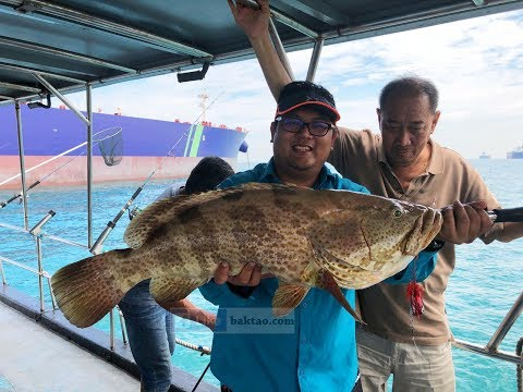 Grouper Fishing Trip On Fish Stalker Charter, Singapore